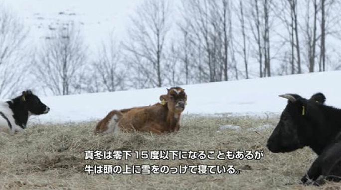 【食品】ギフトに是非!自然放牧の高級牛乳 - 中洞牧場のジャージー牛乳