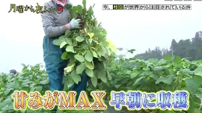 【食品】最高級の枝豆にマツコも絶賛!群馬県産 天狗印枝豆「味緑みりょく」