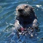 【デート】夏休みに行きたい!東京近郊の水族館まとめ。