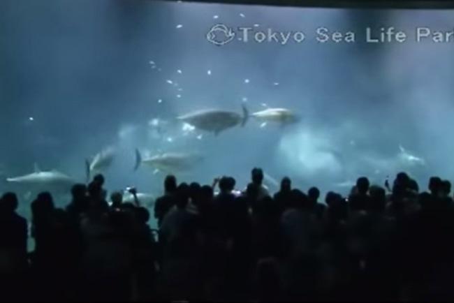 【デート】東京近郊の水族館まとめ。