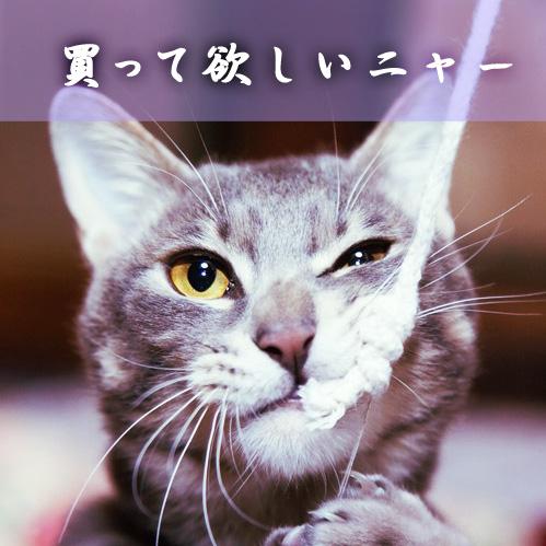 【猫グッズ 】愛猫に買ってあげたい!猫グッツ総まとめ!
